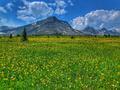Wildflowers on Skyline