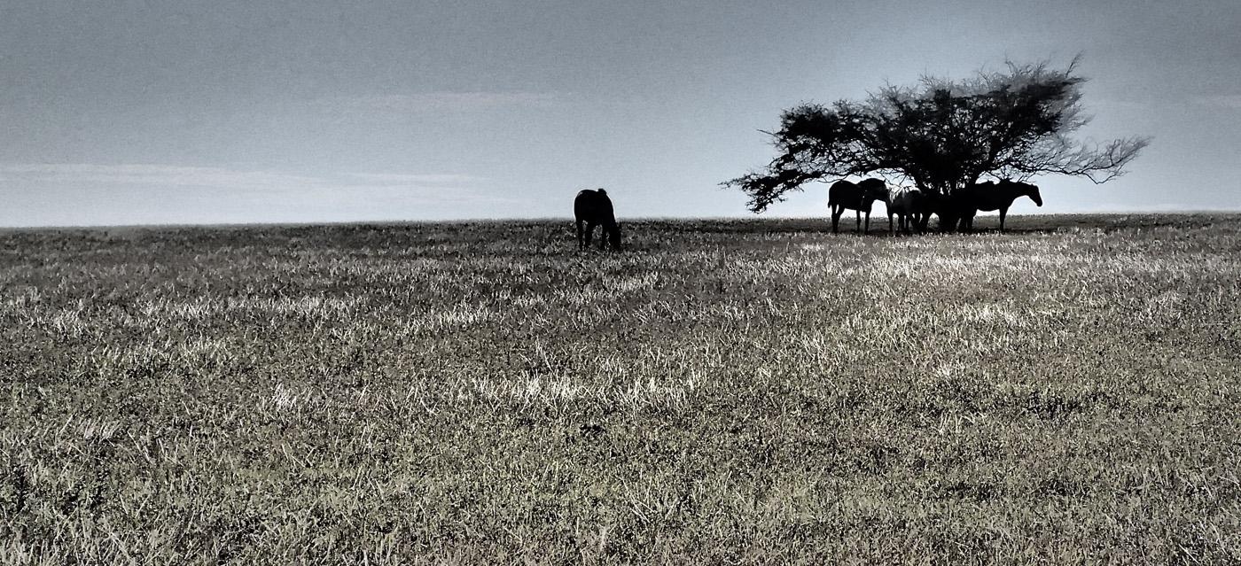 horse hawaii, photo
