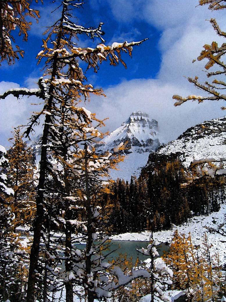 autumn lake o'hara snowfall yoho british columbia, photo
